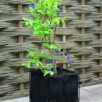 Haxnicks Vigoroot Planter Standard