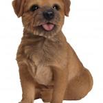 Vivid Arts Real Life Border Terrier – Size B