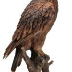Vivid Arts Real Life Golden Eagle – Size B