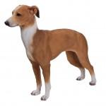 Vivid Arts Real Life Greyhound – Size B