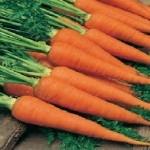 Autumn King 2 Carrot Seeds