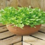 Green Leaves Mixed Lettuce Seeds