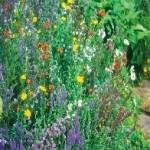 Wildlife Mixture Wildflower Seeds