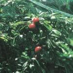 Plant Protection Net 4x2m