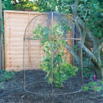 Haxnicks Round Fruit Cage Natural Bamboo