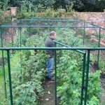6ft High Deluxe Fruit Cage (Green)