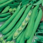Fothergills BROAD BEAN Masterpiece Green Longpod Seeds