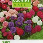 Country Value ASTER Colour Carpet Mixed Seeds